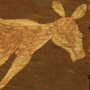 Dick murramurra Kangaroo