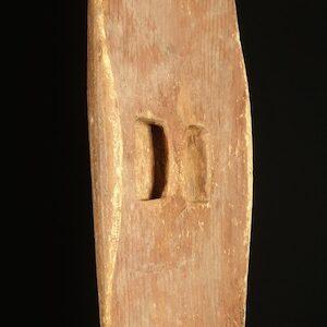 Central desert shield beanwood